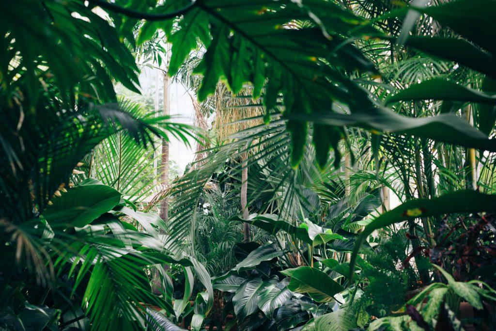 ostrov-zelenoi-shizni