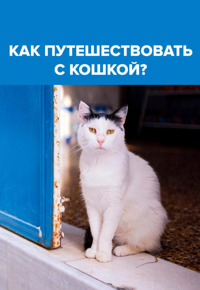 Правила путешествий с питомцем (кошкой или маленькой собакой)